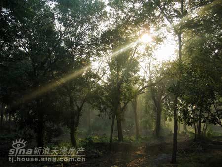 图为:原生态树林