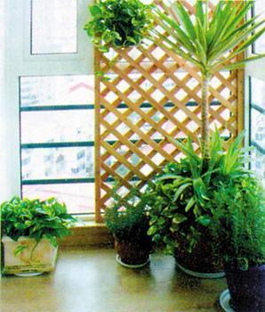 如果家人喜欢在阳台上活动,最好不要种植那些尖叶植物,而熏衣草、