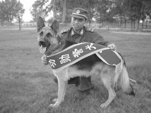 两警犬车祸中挺身护主被授予功勋警犬称号(图)