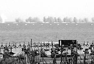 模仿二战德军战术台军演练反登陆作战(附图)