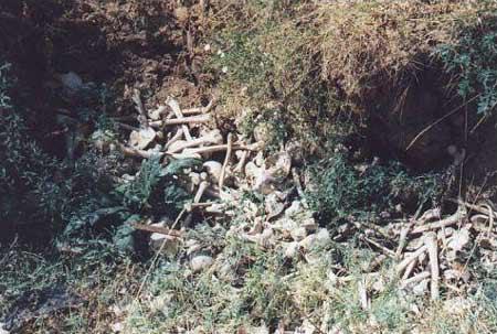 图文:今天在城市郊区仍旧可见白骨1