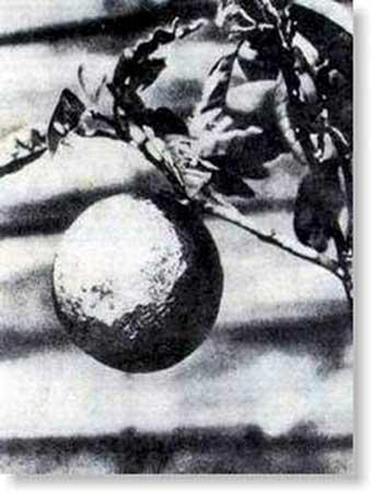 公众如何看是否该向日本扔原子弹(6)