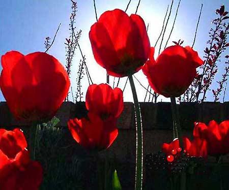 世界上最罕见的七种花 - Qzone日志 - 江平 - 北国风光2009