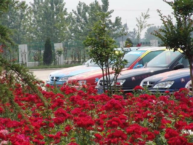 德国-南京v图片图片暖暖青岛s攻略图片