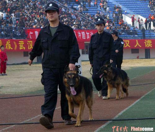 图文-武汉主场2-4负厦门警察带着警犬维持秩序