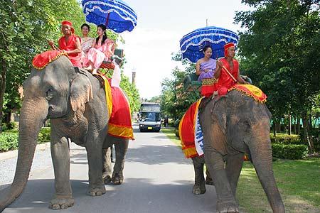 图文-精品高尔夫名人邀请赛大象迎接贵宾来临