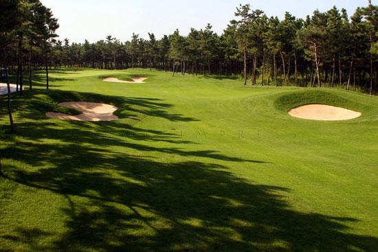 图文-南山国际高尔夫球场球道被树林围绕