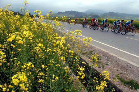 图文-环湖赛第五赛段赛况油菜花组成沿途最美风景