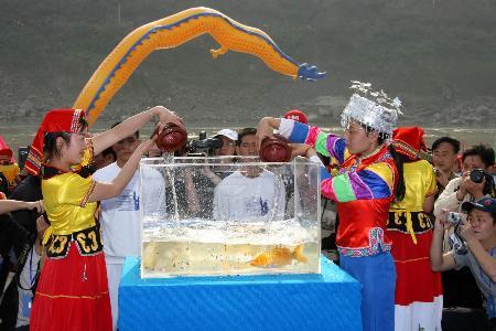 战役-攀枝花仪式长江放生v战役鲤鱼漂流国际_格登山之图文图片