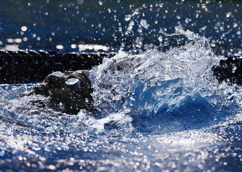 出水猛兽暴风骤雨绝妙身姿击碎宁静--游泳十佳图