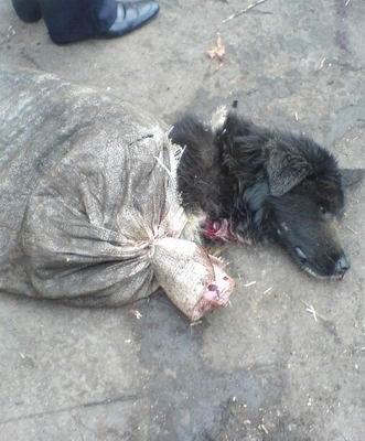 淫虐杀动物被杀的案件_被杀死的狗