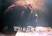 刘海洋伤熊事件结局_图文:北京动物园受伤黑熊伤势好转