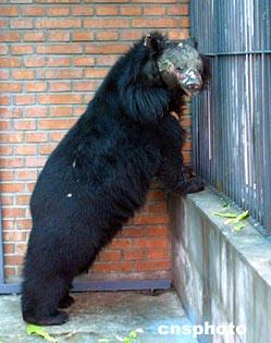 刘海洋伤熊事件结局_硫酸泼熊_被硫酸泼过的人图片,被泼硫酸毁容图片图片