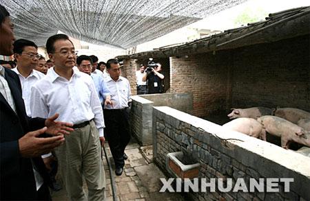 温家宝考察生猪生产及猪肉供应情况(视频)