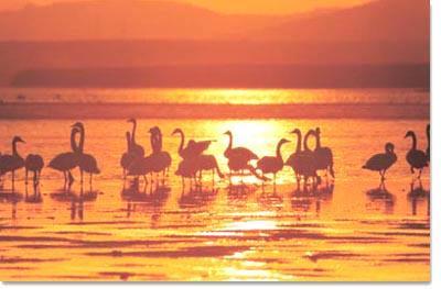 荣成天鹅湖--中国北方最大的天鹅湖